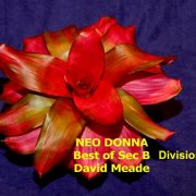 image aj-best-of-division-iii-section-b-jpg