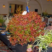 image MSM_8755-Head-table-and-Best-of-Show-Neo-Fireball-Basket-1024w.jpg