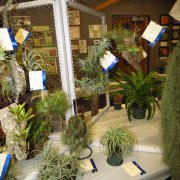 image 45-horticultural-displays-multi-foliage-jpg