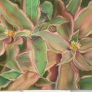 image 65-award-of-excellence-pastel-cryptanthus-jean-nicole-jpg