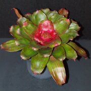 image 65-merit-neoregelia-small-world-jpg