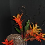image 46-merit-spinning-out-of-control-guzmania-orange-delight-jpg